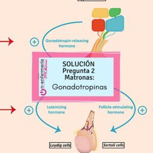 gonodotropinas ope matronas