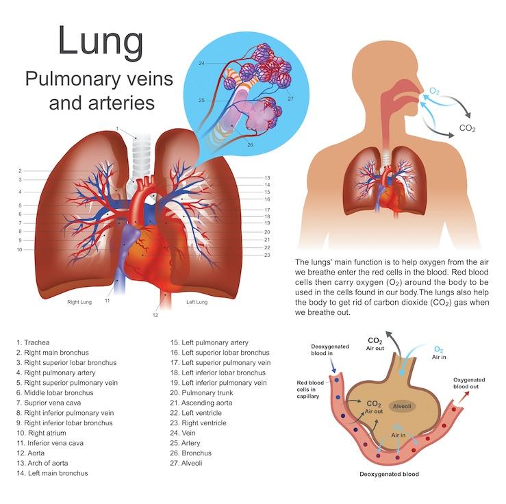 pulmones auxiliares de enfermeria