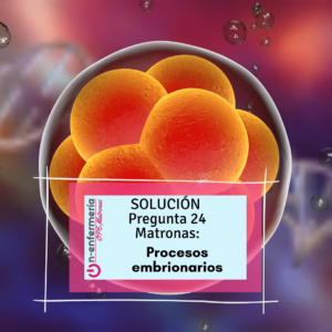 segmentación embionaria-onenfermeria-embiología